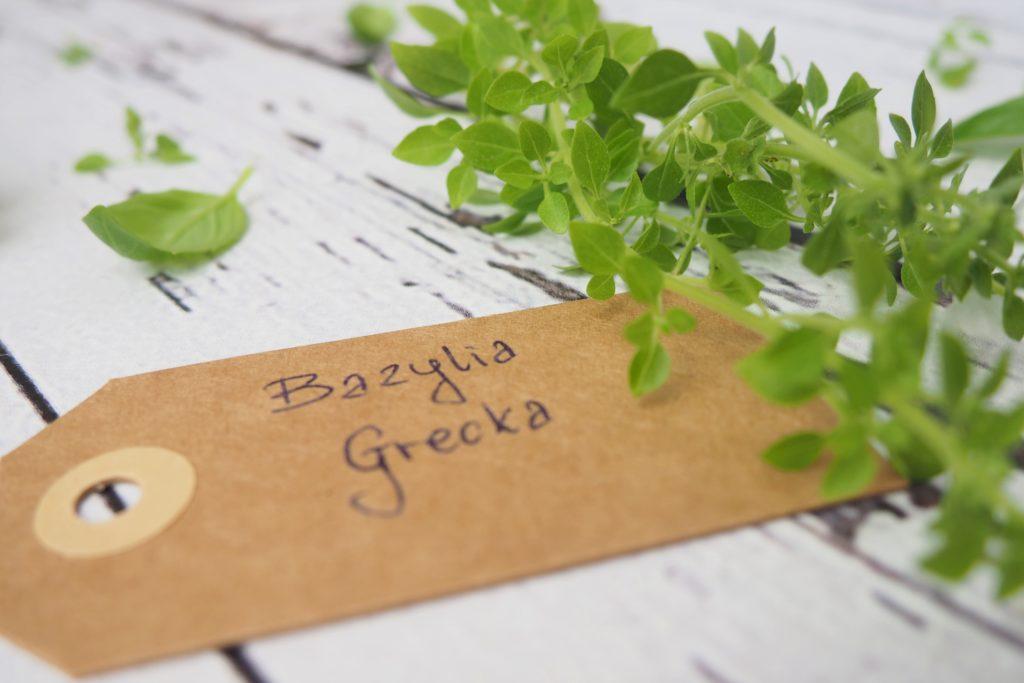 Bazylia grecka