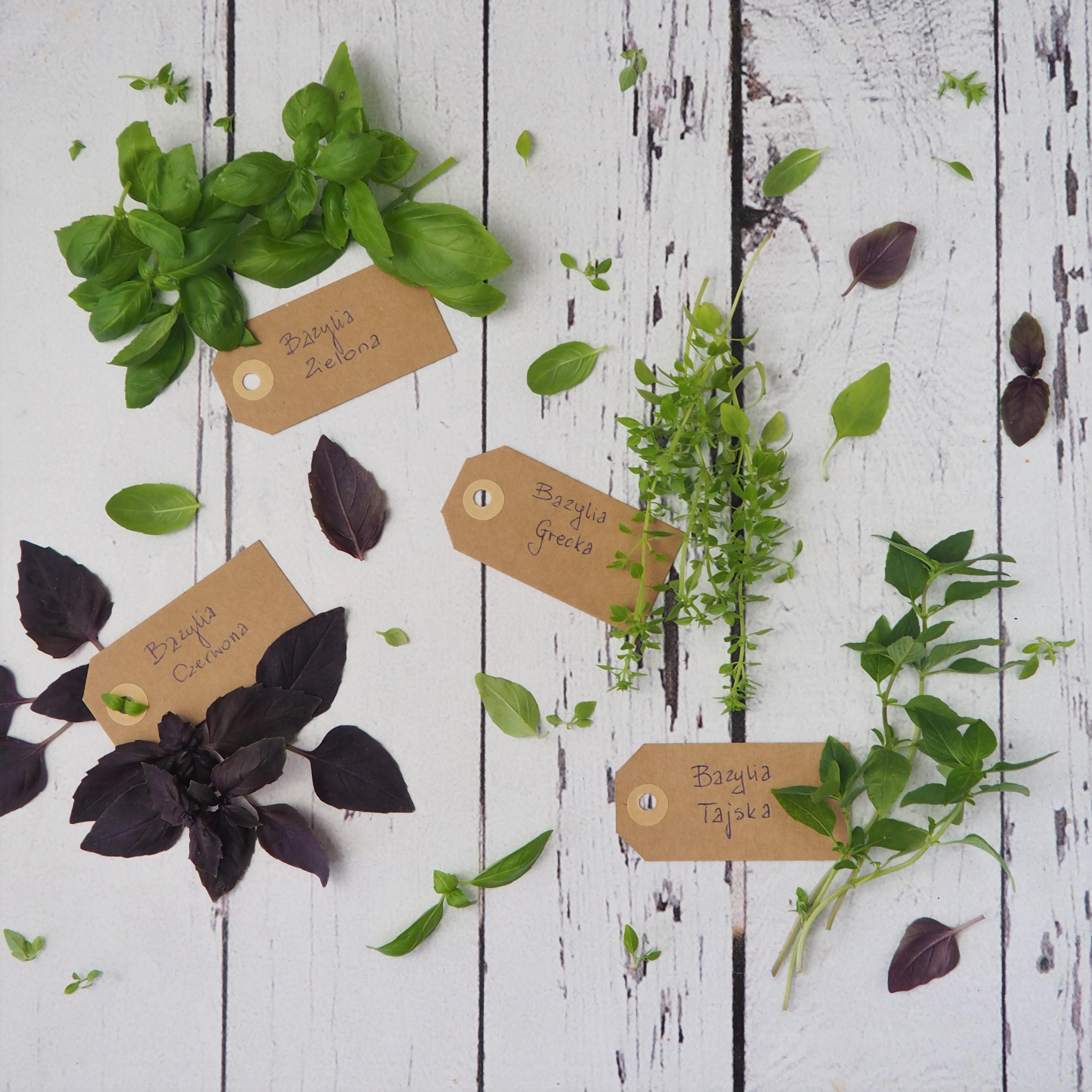 Bazylia – właściwości, odmiany, inspiracje kulinarne