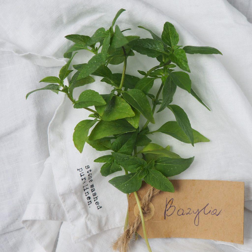 Bazylia - niezastąpione zioło w każdej kuchni