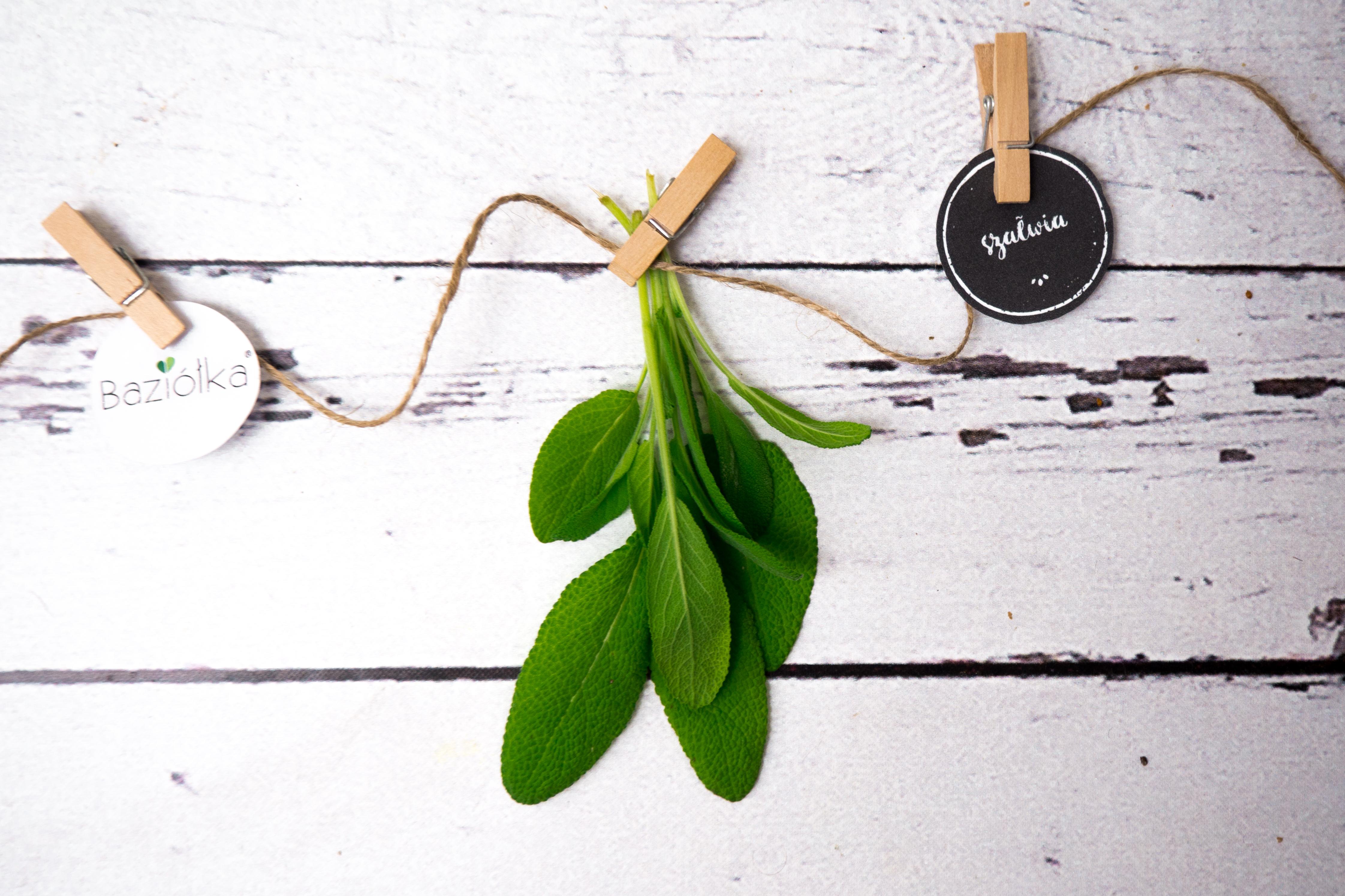 Szałwia – 8 faktów i 27 inspiracji kulinarnych, które musisz znać!