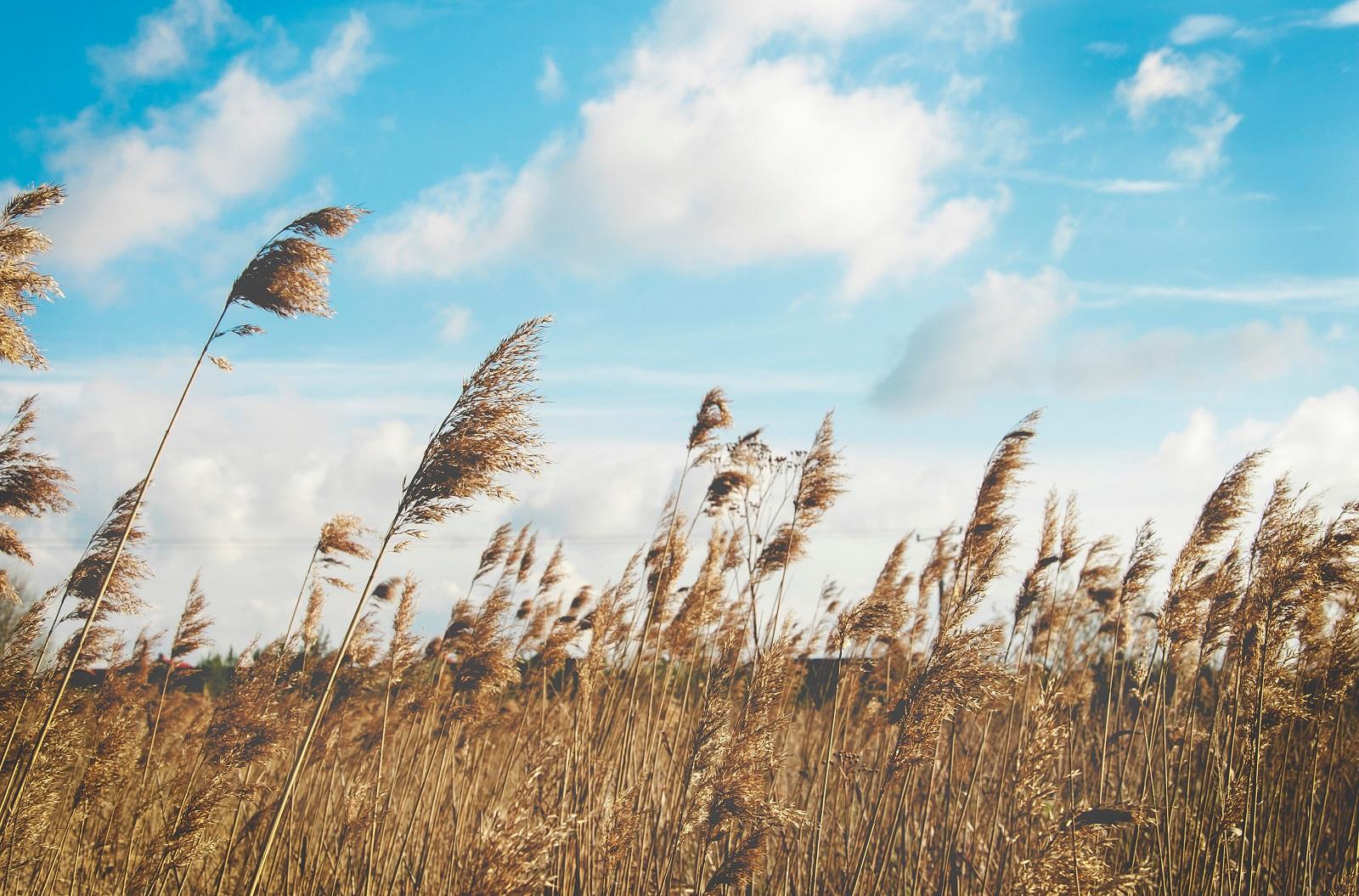 Na ratunek alergikom – żywność o działaniu przeciwhistaminowym