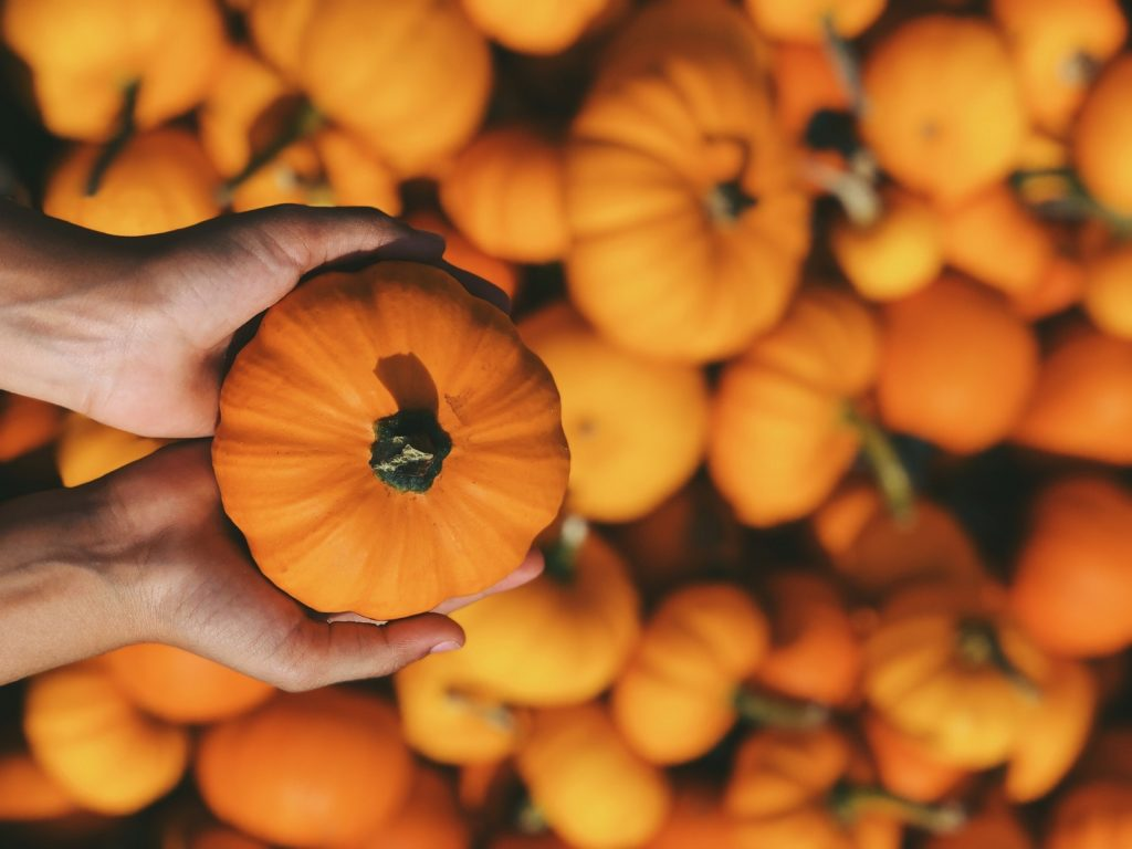 co jeść jesienią