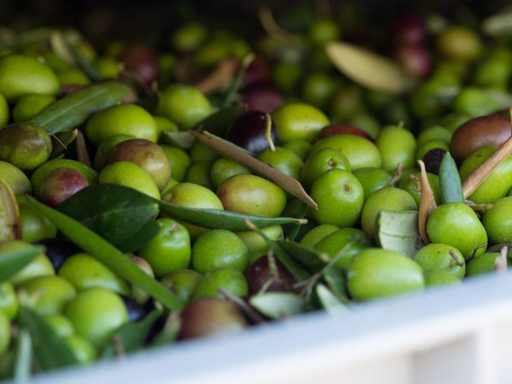 oliwki i oliwa z oliwek to dobre źródło jednonienasyconych kwasów tłuszczowych (MUFA)