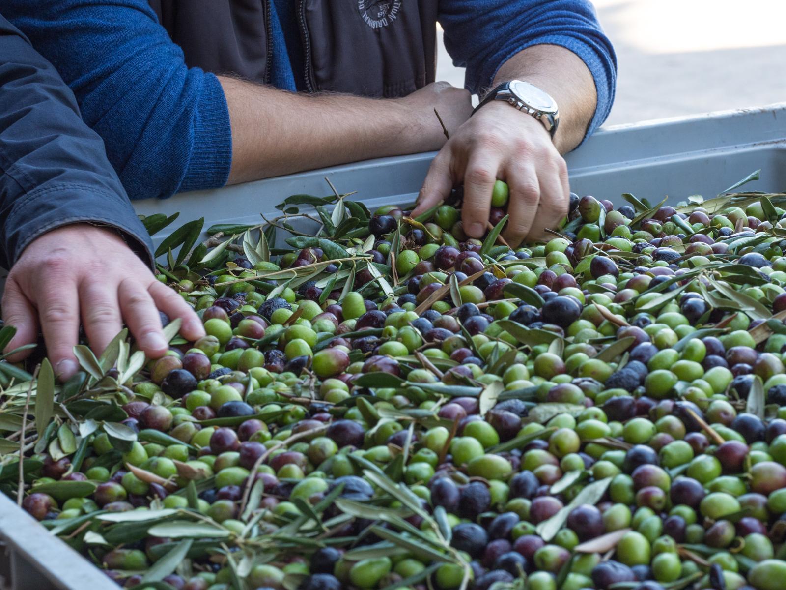 Oliwa z oliwek – co tak naprawdę różni ją od innych olejów