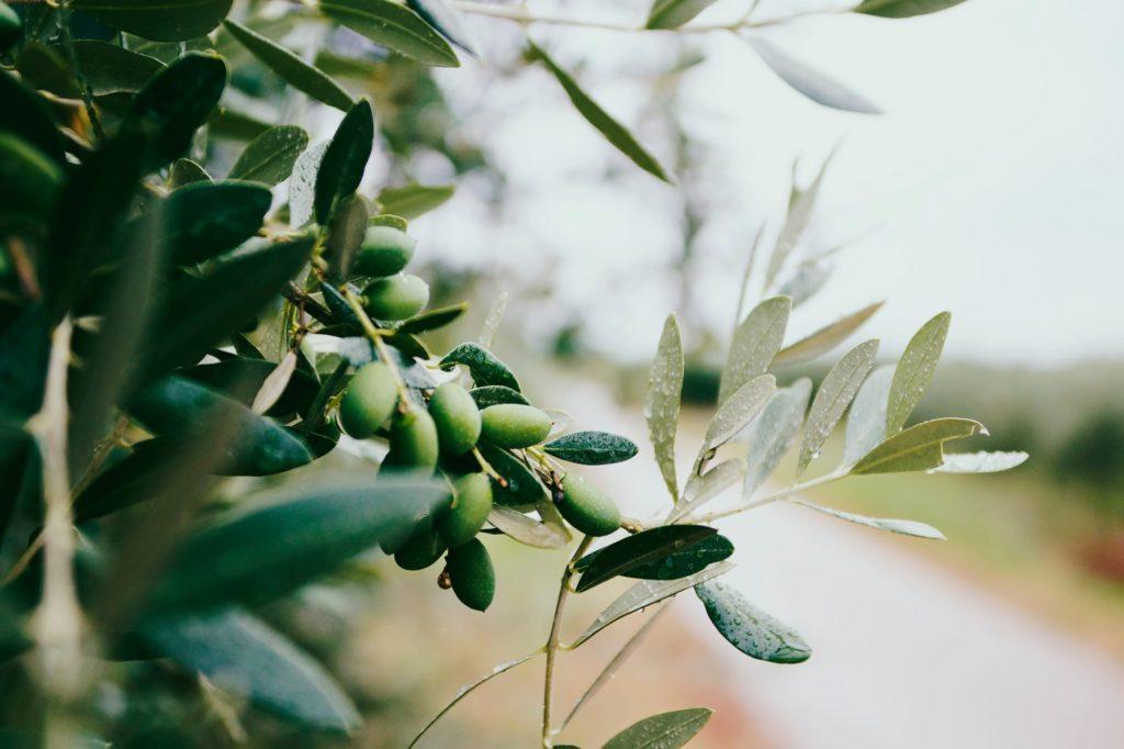 tłuszcz w diecie odchudzającej - oliwa z oliwek