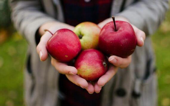 Dlaczego warto jeść polskie jabłka? + 3 przepisy